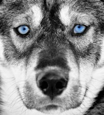 dog-awesome-26