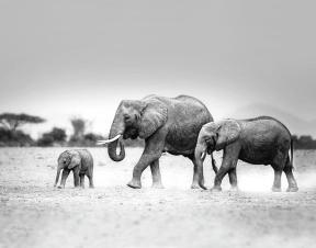 elephant-family-11x14-vicki-jauron