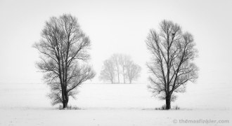 fine-art-photography-black-and-white-vision-landscape-wall-art-minimalist-trees-misty-winter-snow-calming-silence-prints-for-sale