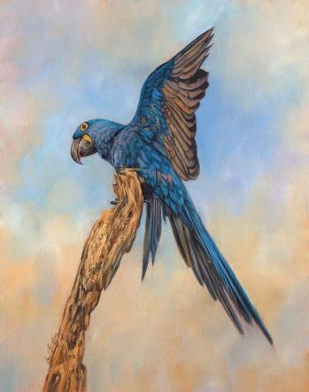 hayacinth-macaw-david-stribbling