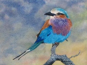lilac-breasted-roller-sharon-farber
