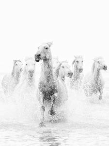 nadia-isakova-white-horses-of-camargue-running-through-the-water-camargue-france_u-l-pxt60j0