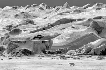 PNN_Svalbard_5-18-17_27630_KBG_40x60