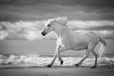 run-white-horses-v-tim-booth