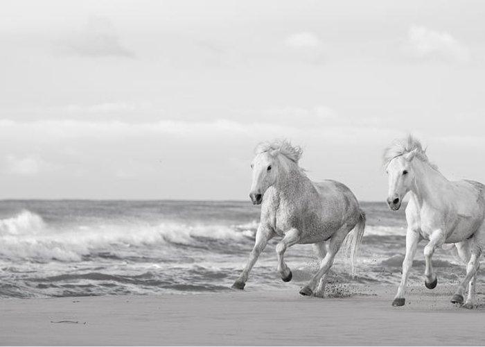run-white-horses-vi-tim-booth