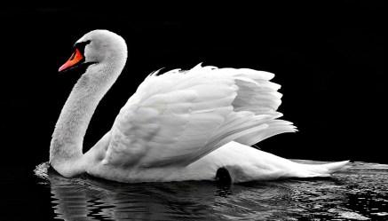 swan-2107052_960_720