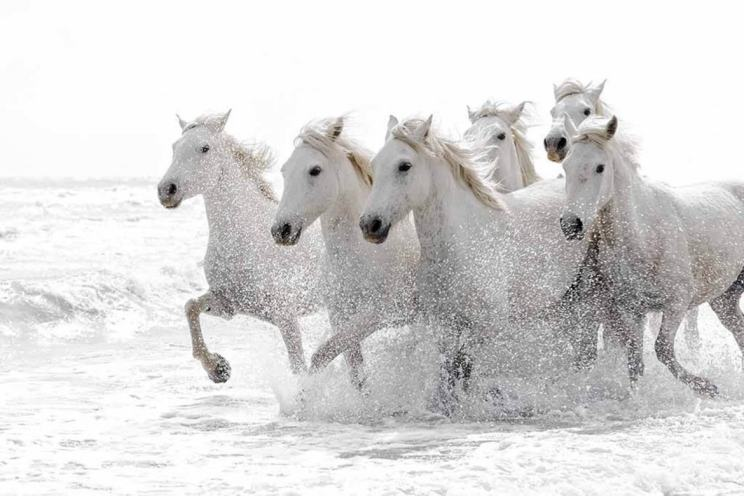 wild-white-horses-in-the-surf-typical-of-the-type-of-image-that-may-be-captured-during-the-natureslens-wild-white-horses-of-the-camargue-photography-holiday-1170x780