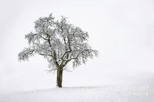 winter-lone-snow-covered-tree-in-a-snowy-field-ulrich-wende