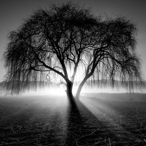 Beauty-Black-and-white-Landscape-Photography