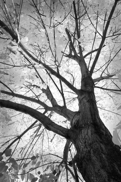 black-and-white-autumn-tree-james-bo-insogna