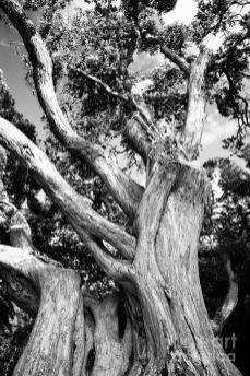 black-and-white-tree-gaspar-avila