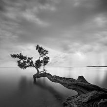 Black-and-white-Trees-Landscapes