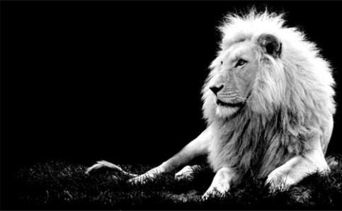 black-white-animal