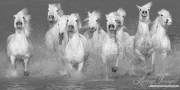 fineart-152-waterhorsesrunning.jpg-nggid041590-ngg0dyn-180x0-00f0w010c010r110f110r010t010