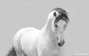 fineart-205-whitestallionagainstthewhite.jpg-nggid046620-ngg0dyn-180x0-00f0w010c010r110f110r010t010