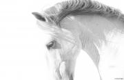 fineart-214-stallionscurve.jpg-nggid047019-ngg0dyn-180x0-00f0w010c010r110f110r010t010