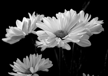 flora-1319424_960_720