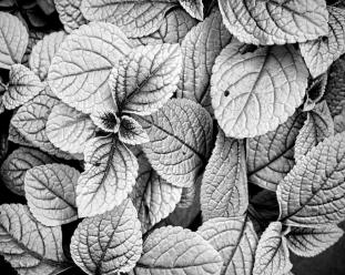 leaves-black-and-white-nature-photography-ann-powell