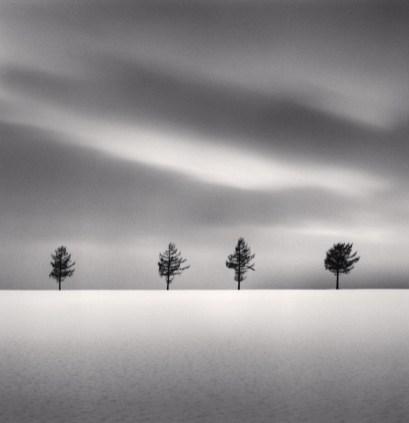 w-+Kenna+Kurosawa's+Trees,+Study+2,+Memanbetsu,+Hokkaido,+Japan.+2009