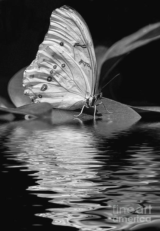 white-butterfly-bw-elisabeth-lucas