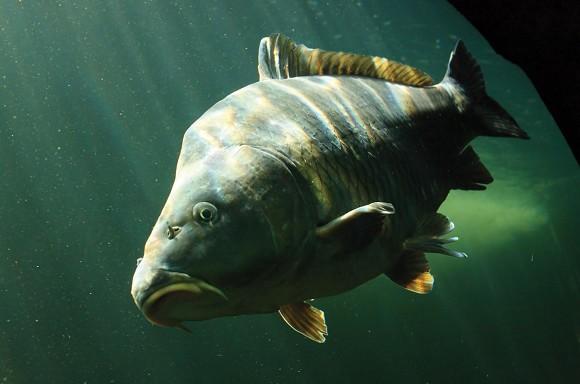 muškarac akvarij koji izlazi sa ženom riba