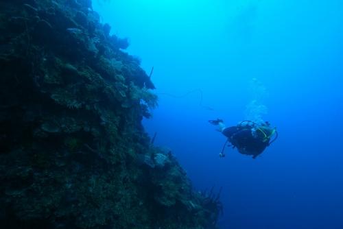 cindy-scuba-wall-romona_robbins (500x334)