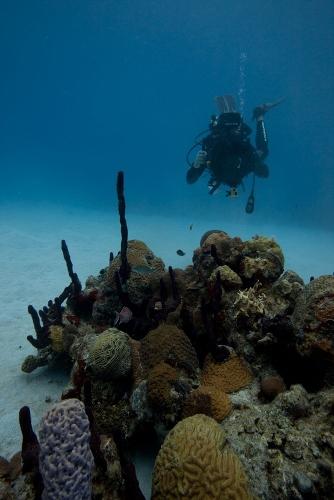 underwater-photog-romona_robbins (334x500)