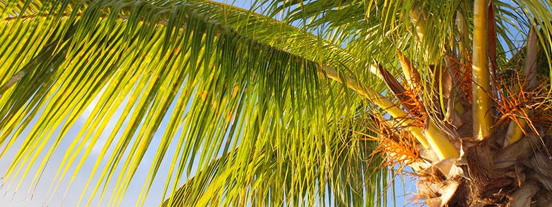 St Croix Palm Tree Eco Lodges