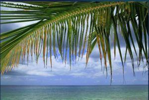 paradise-in-full