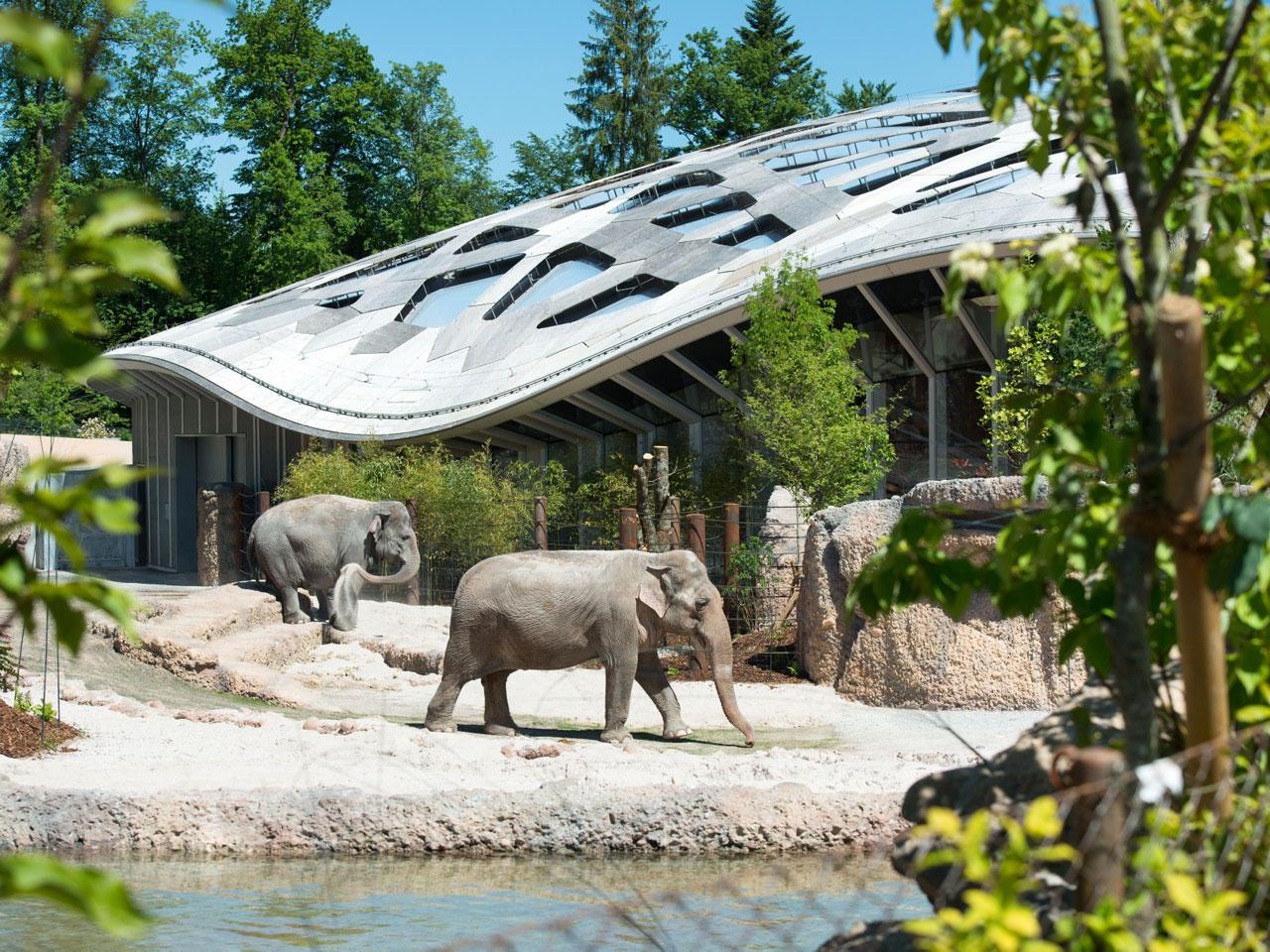 Слоны в Цюрихском зоопарке