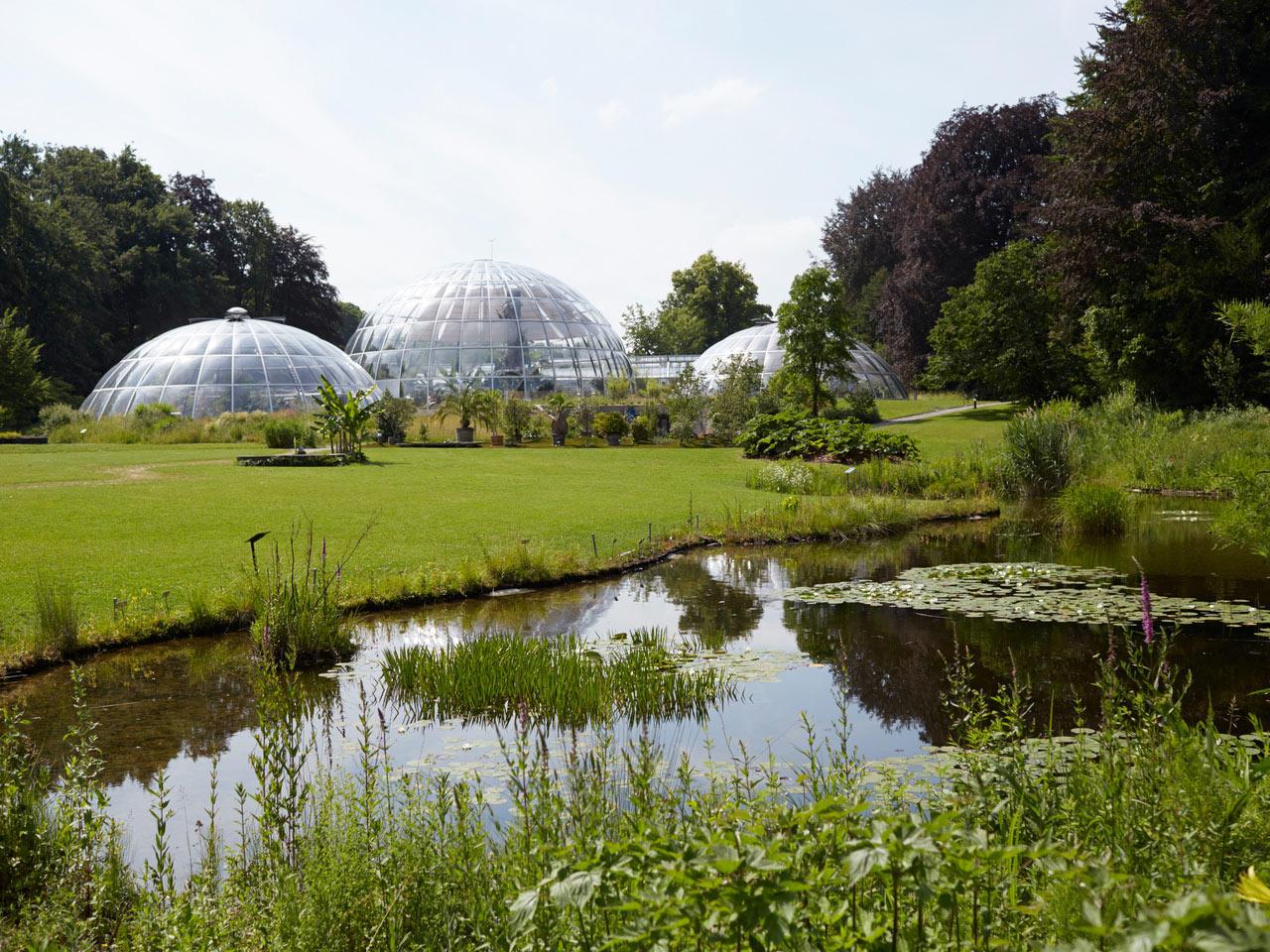Бесплатный ботанический сад Цюрихского университета