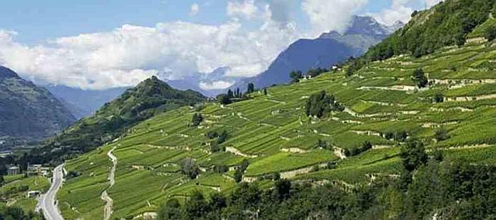 Виноградники близ Сьон