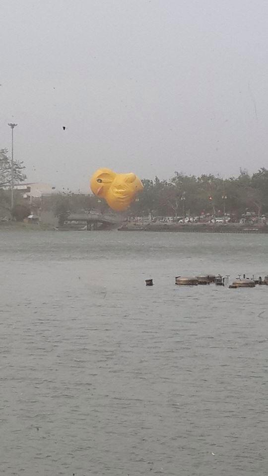 Udon Thani duck tries to fly