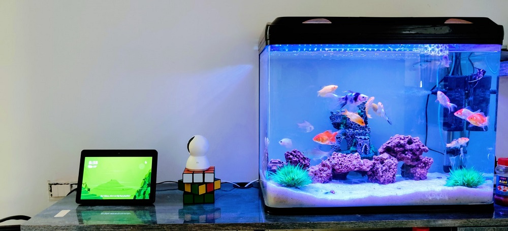 image-aquarium