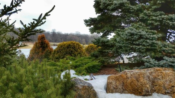 PHOTO: Platycladus orientalis 'Elegantisima' and Thuja occidentalis 'Golden Globe' provide a burst of color with Picea pungens 'Montgomery' and other evergreens providing a calming backdrop.