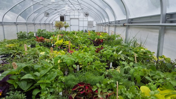 PHOTO: A greenhouse full of the plants we use for our many activities on- and offsite.