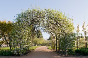 PHOTO: The apple arbor in bloom, April 2012.
