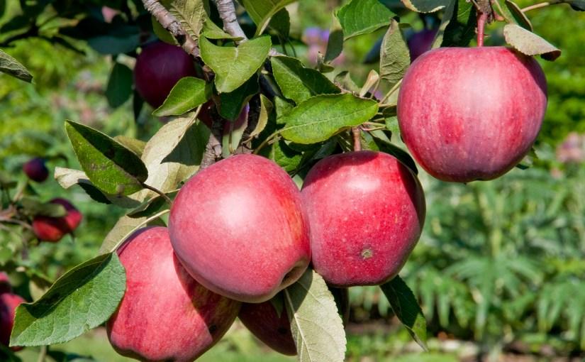 Fruit Trees Chill Factor