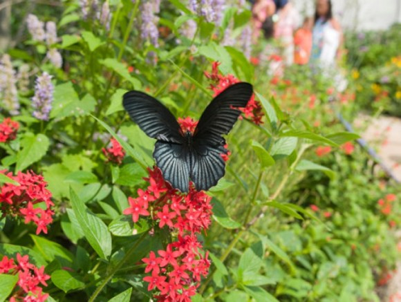 "Watching butterflies is one of the many ways nature provides us with ""soft fascination."""