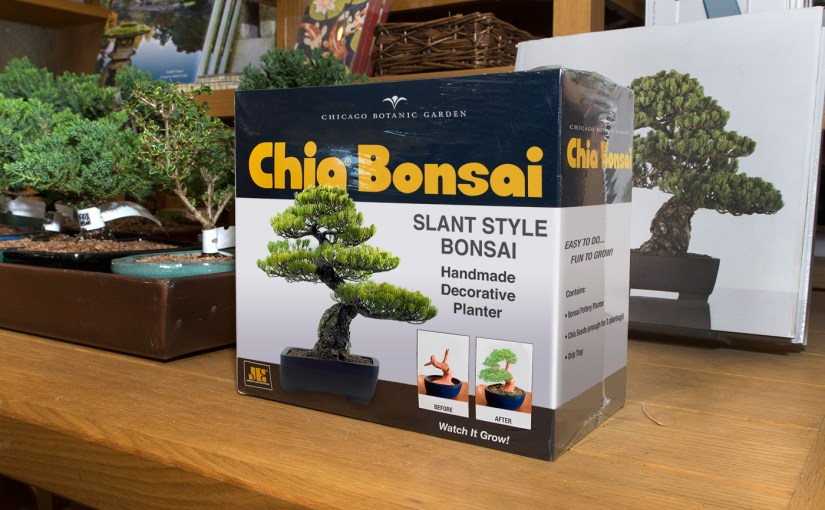 Easiest. Bonsai. Ever.