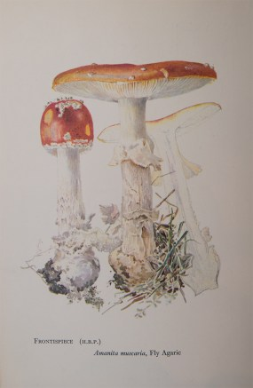 Potter was also an accomplished naturalist and botanical illustrator, although her paper On the Germination of the Spores of Agaricineae was dismissed by London's Linnean Society—which had typical Victorian assumptions about women and their research.