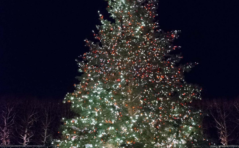 PHOTO: The Chicago Botanic Garden's annual Christmas tree in the Heritage Garden.