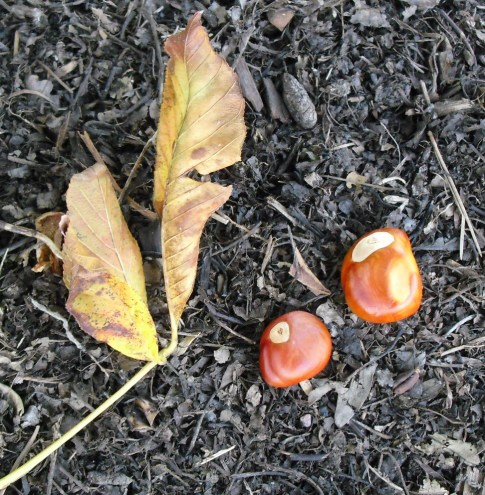 PHOTO: This is a pair of leaves with some type of nuts.