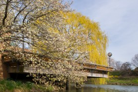 PHOTO: A view from the Skokie Lagoons of the cafe deck, with trees in bloom.