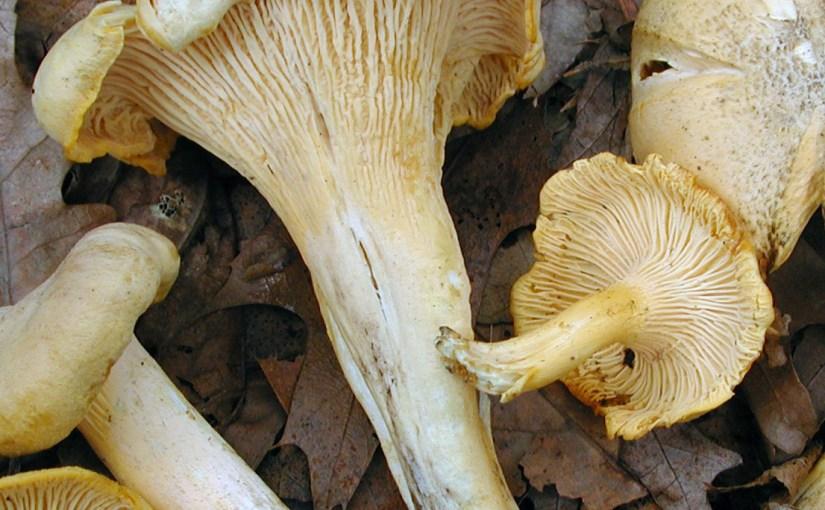 Mushroom Discovery