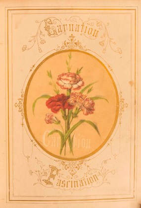 PHOTO: Carnation Fascination bookcover.