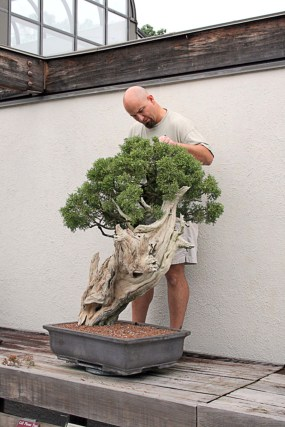 PHOTO: Chris Baker pruning bonsai.