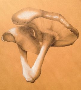 ILLUSTRATION: Shitake Mushrooms by Christina Lovering