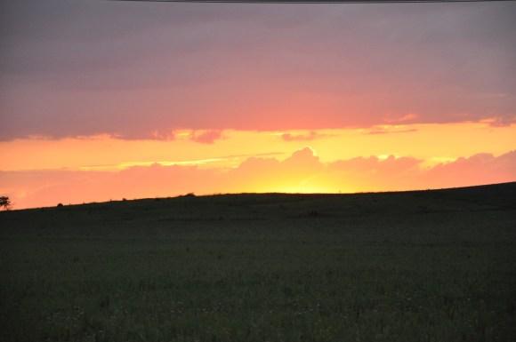 Bison will soon graze the vast prairie. Photo by Pati Vitt.