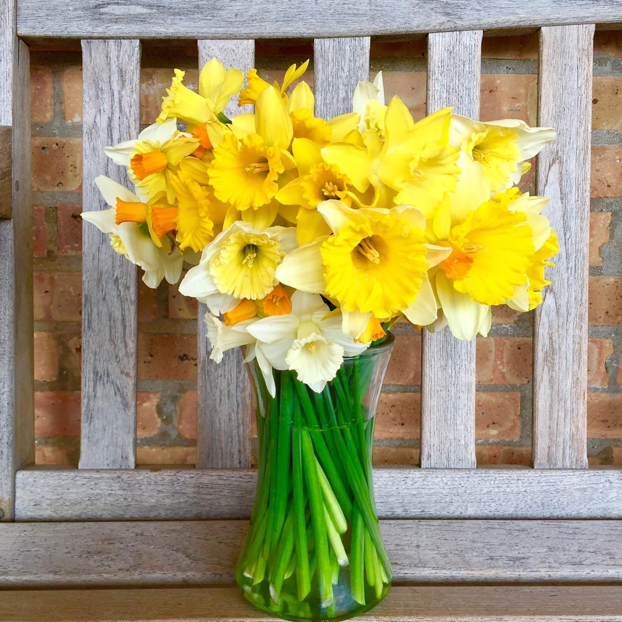 daffodil - photo #22
